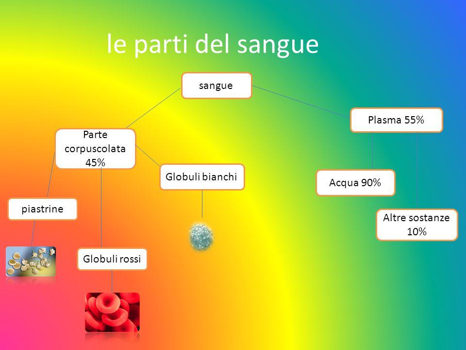 le parti del sangue sangue Plasma 55% Parte corpuscolata 45%