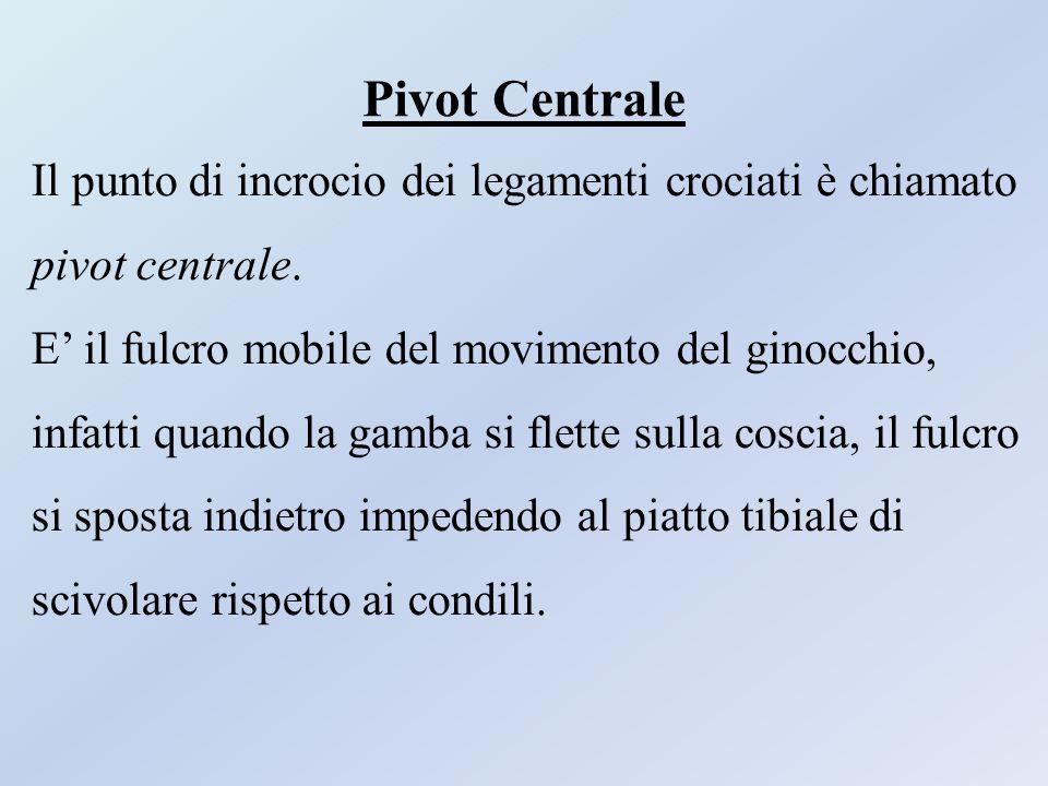 Pivot Centrale Il punto di incrocio dei legamenti crociati è chiamato