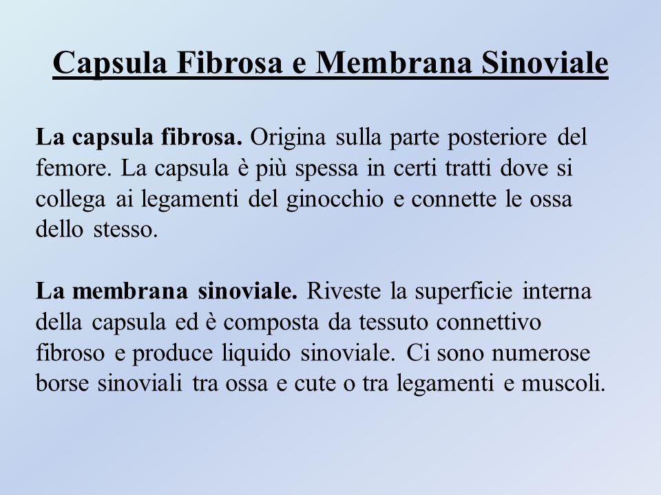 Capsula Fibrosa e Membrana Sinoviale