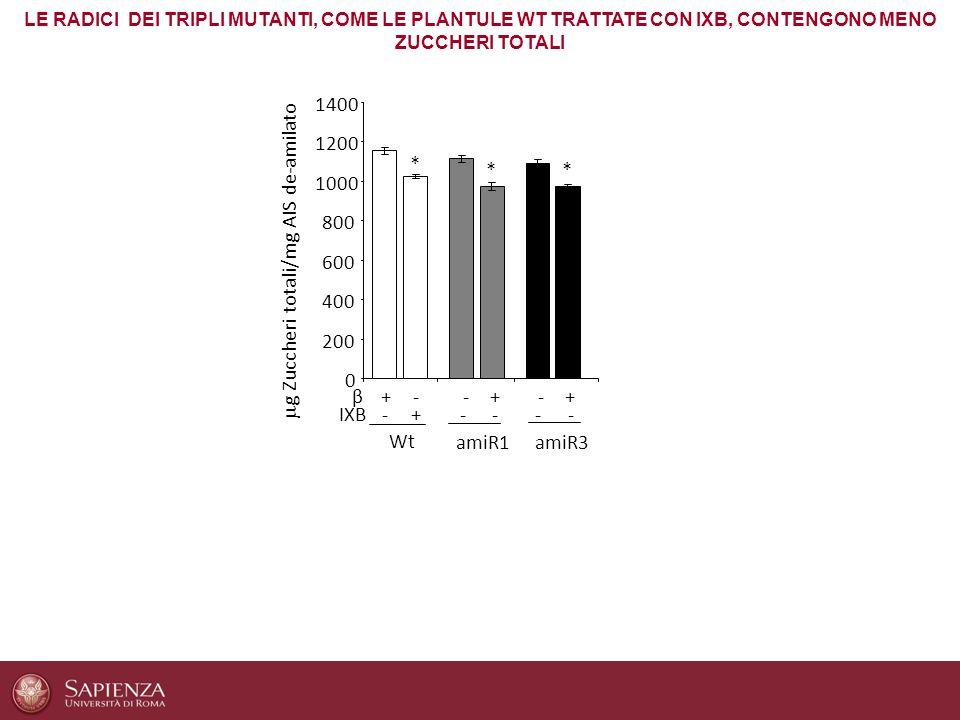 g Zuccheri totali/mg AIS de-amilato *