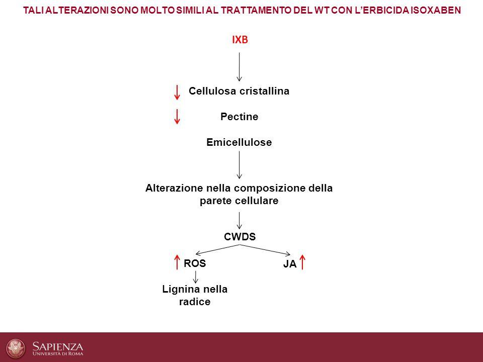 IXB Cellulosa cristallina Pectine Emicellulose