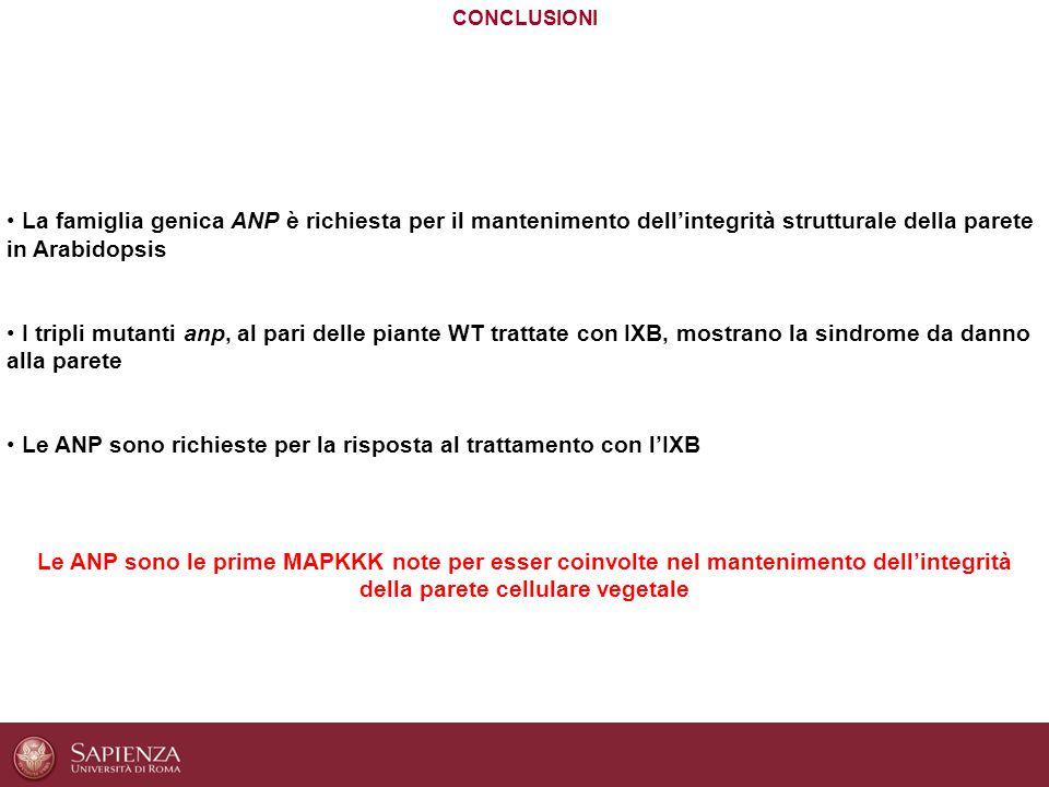Le ANP sono richieste per la risposta al trattamento con l'IXB