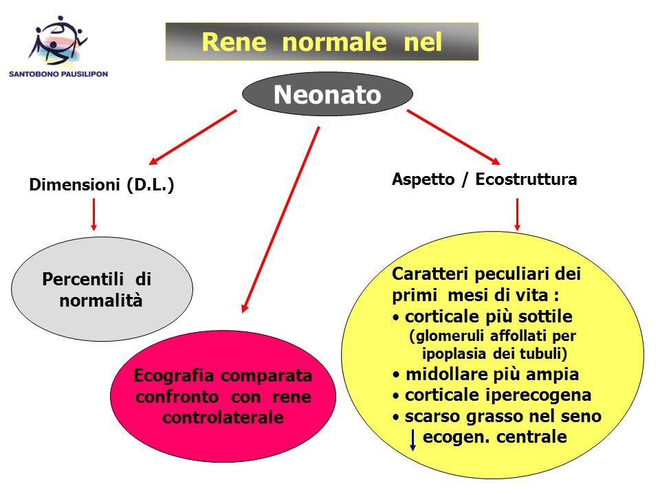 Rene normale nel Neonato