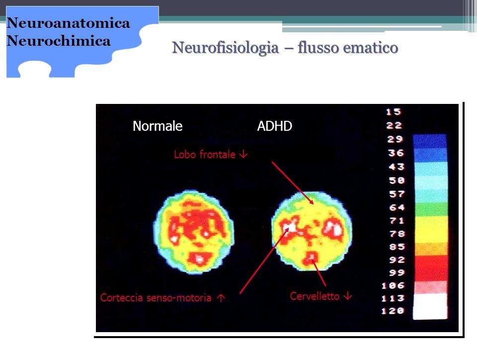 Neurofisiologia – flusso ematico