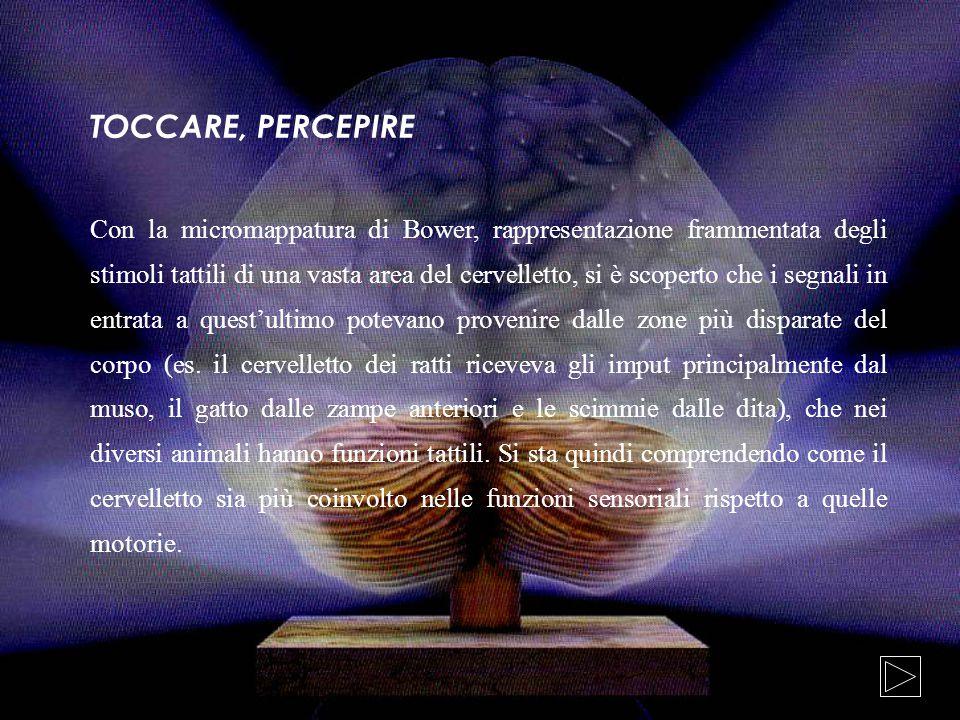 TOCCARE, PERCEPIRE