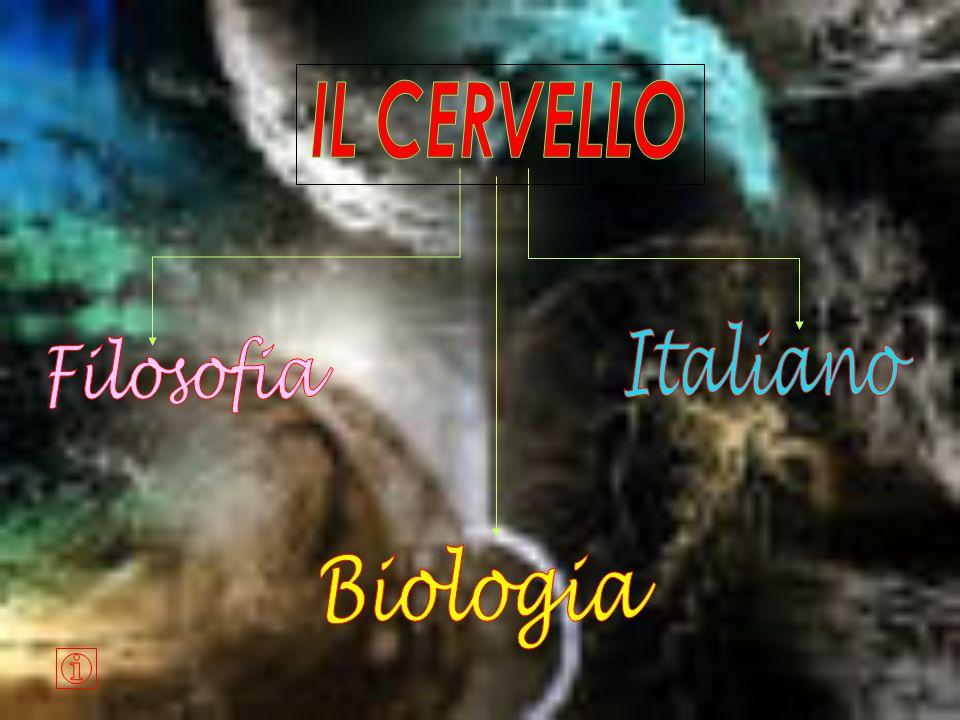 IL CERVELLO Italiano Filosofia Biologia