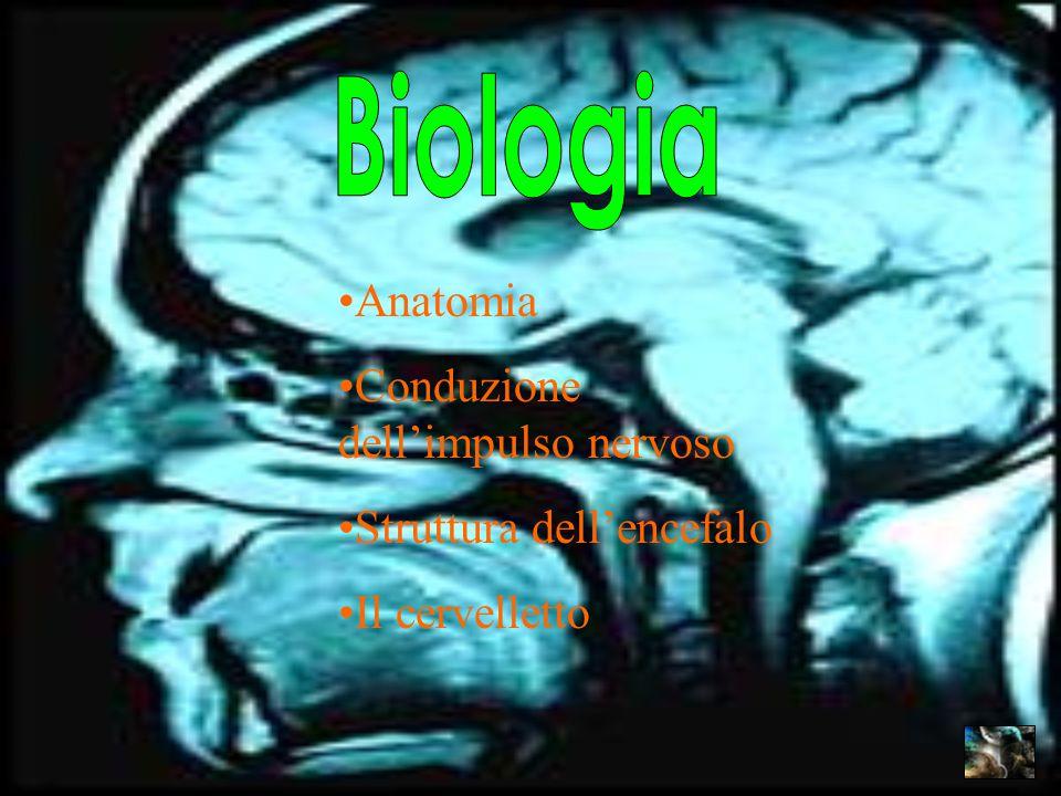 Biologia Anatomia Conduzione dell'impulso nervoso
