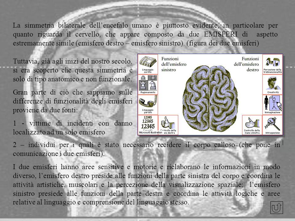 La simmetria bilaterale dell'encefalo umano è piuttosto evidente, in particolare per quanto riguarda il cervello, che appare composto da due EMISFERI di aspetto estremamente simile (emisfero destro – emisfero sinistro). (figura dei due emisferi)