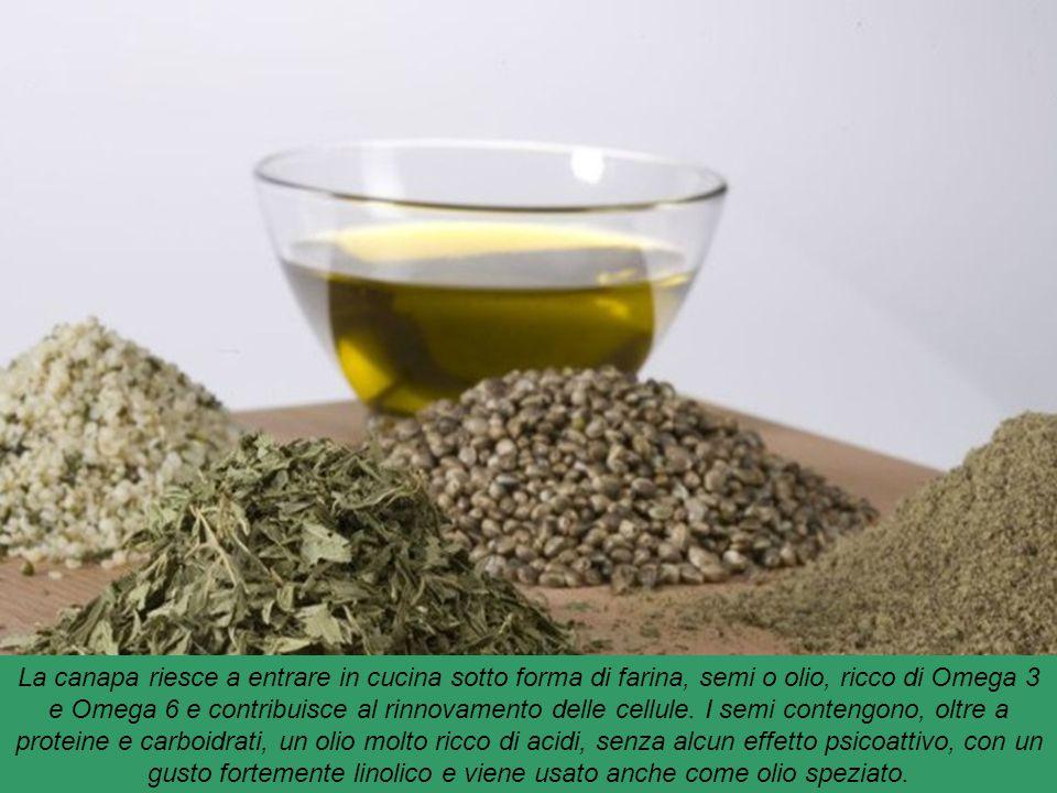 La canapa riesce a entrare in cucina sotto forma di farina, semi o olio, ricco di Omega 3 e Omega 6 e contribuisce al rinnovamento delle cellule.