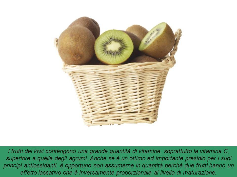 I frutti del kiwi contengono una grande quantità di vitamine, soprattutto la vitamina C, superiore a quella degli agrumi.