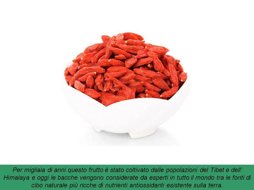 Per migliaia di anni questo frutto è stato coltivato dalle popolazioni del Tibet e dell' Himalaya e oggi le bacche vengono considerate da esperti in tutto il mondo tra le fonti di cibo naturale più ricche di nutrienti antiossidanti esistente sulla terra.