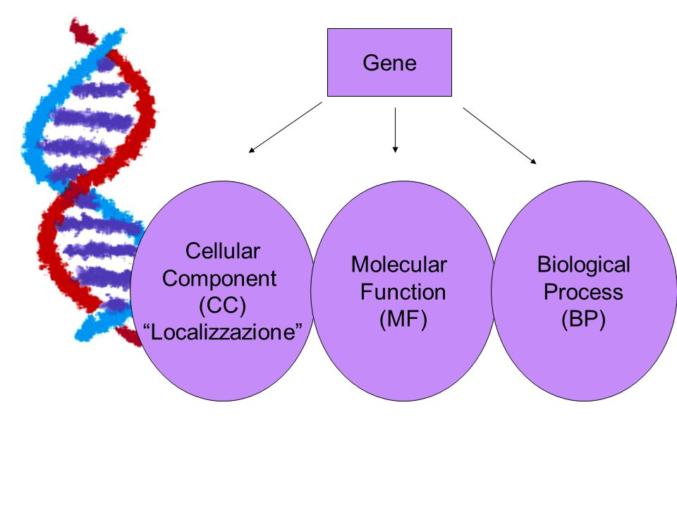 Gene Cellular Component (CC) Localizzazione Molecular Function (MF) Biological Process (BP)