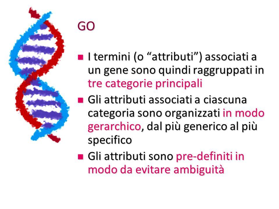 GO I termini (o attributi ) associati a un gene sono quindi raggruppati in tre categorie principali.