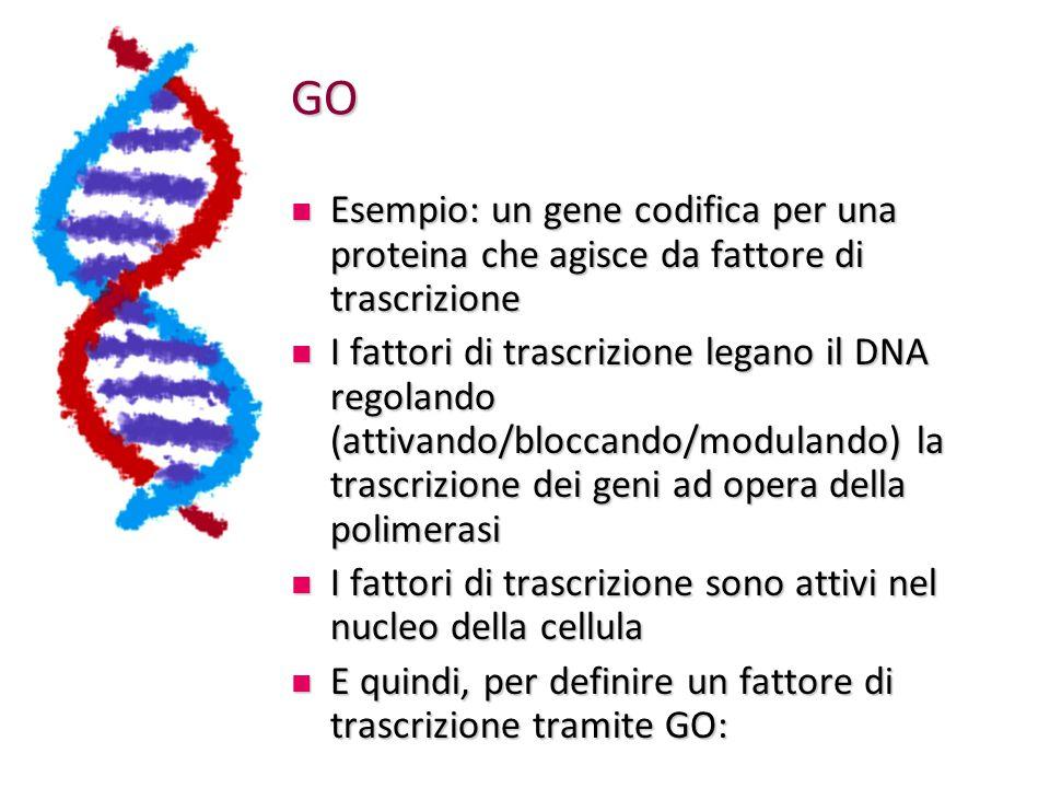GO Esempio: un gene codifica per una proteina che agisce da fattore di trascrizione.