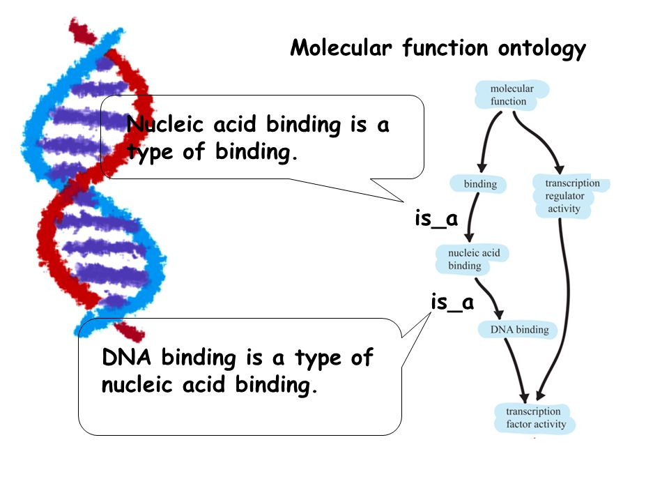 Molecular function ontology