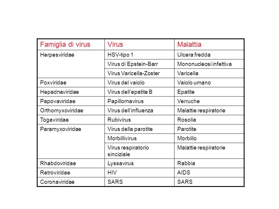 Famiglia di virus Virus Malattia Herpesviridae HSV-tipo 1
