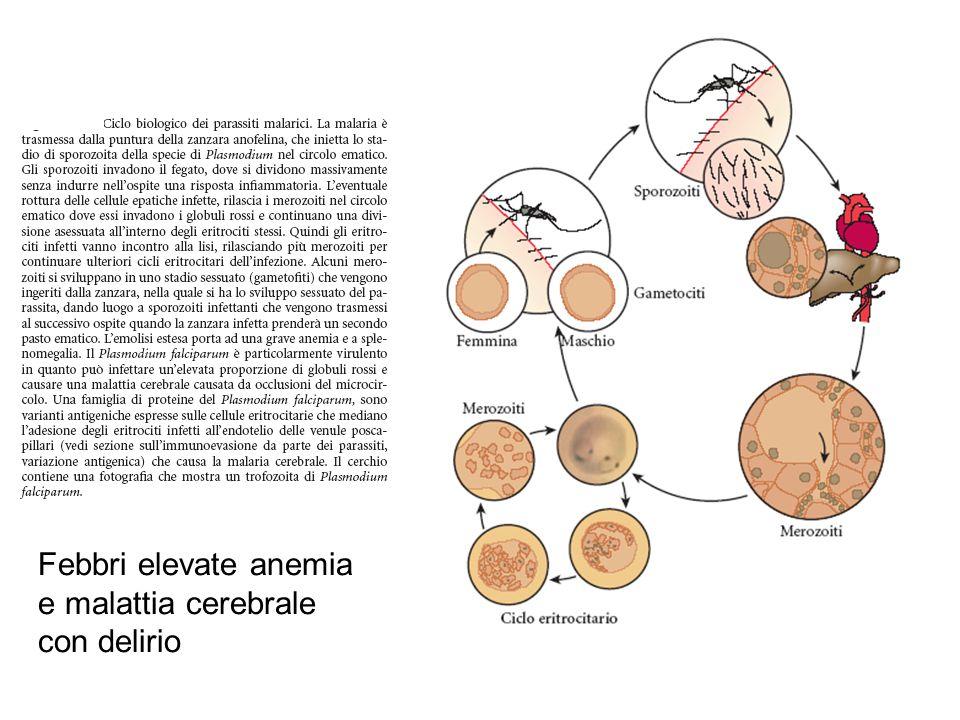 Febbri elevate anemia e malattia cerebrale con delirio