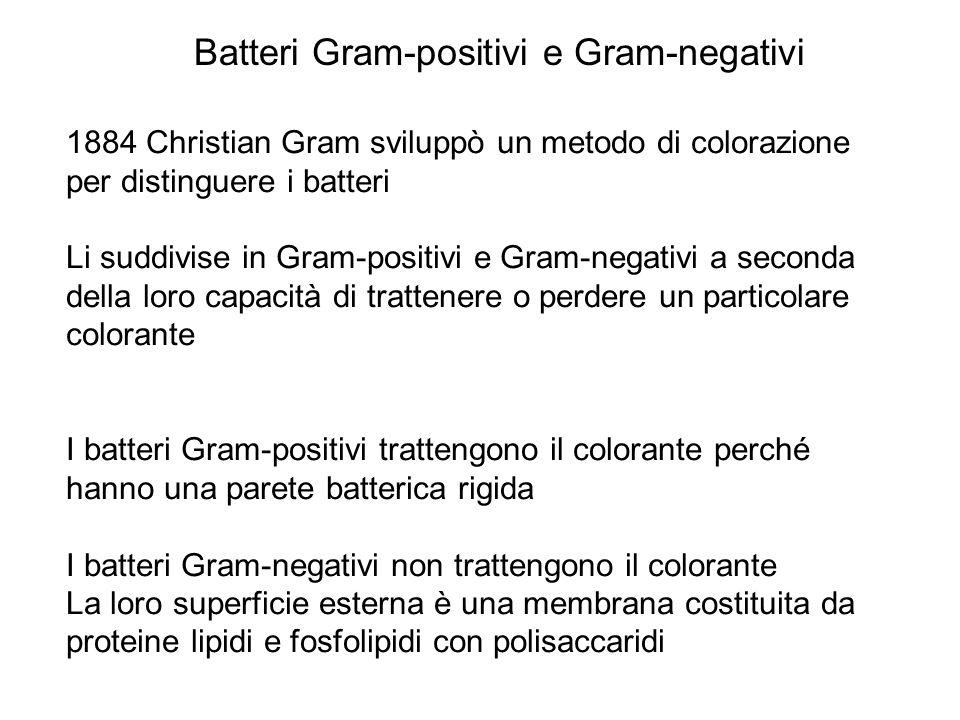 Batteri Gram-positivi e Gram-negativi