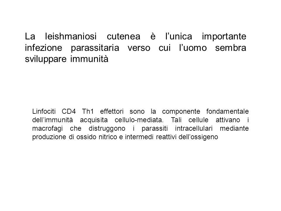 La leishmaniosi cutenea è l'unica importante infezione parassitaria verso cui l'uomo sembra sviluppare immunità