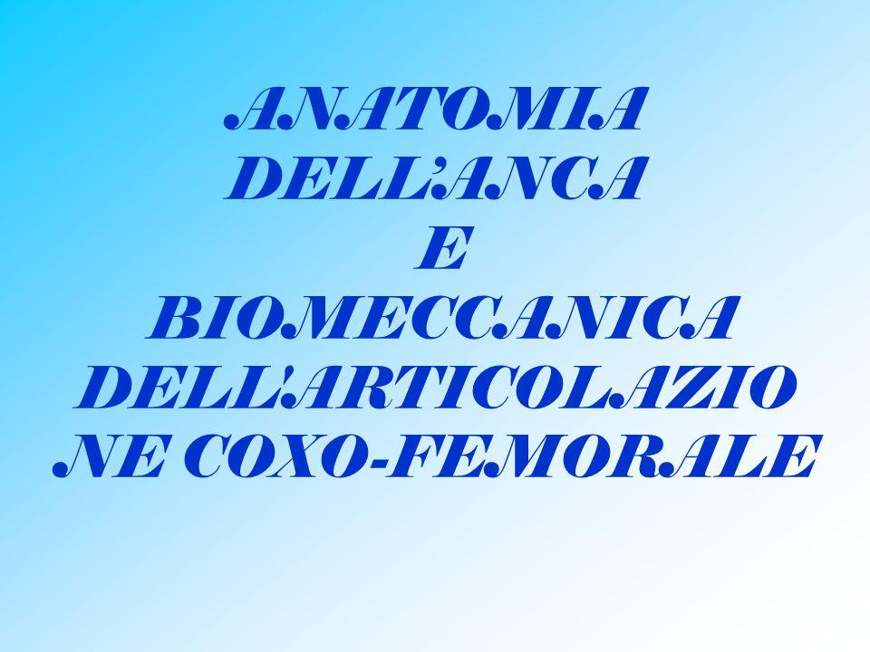ANATOMIA DELL'ANCA E BIOMECCANICA DELL ARTICOLAZIONE COXO-FEMORALE