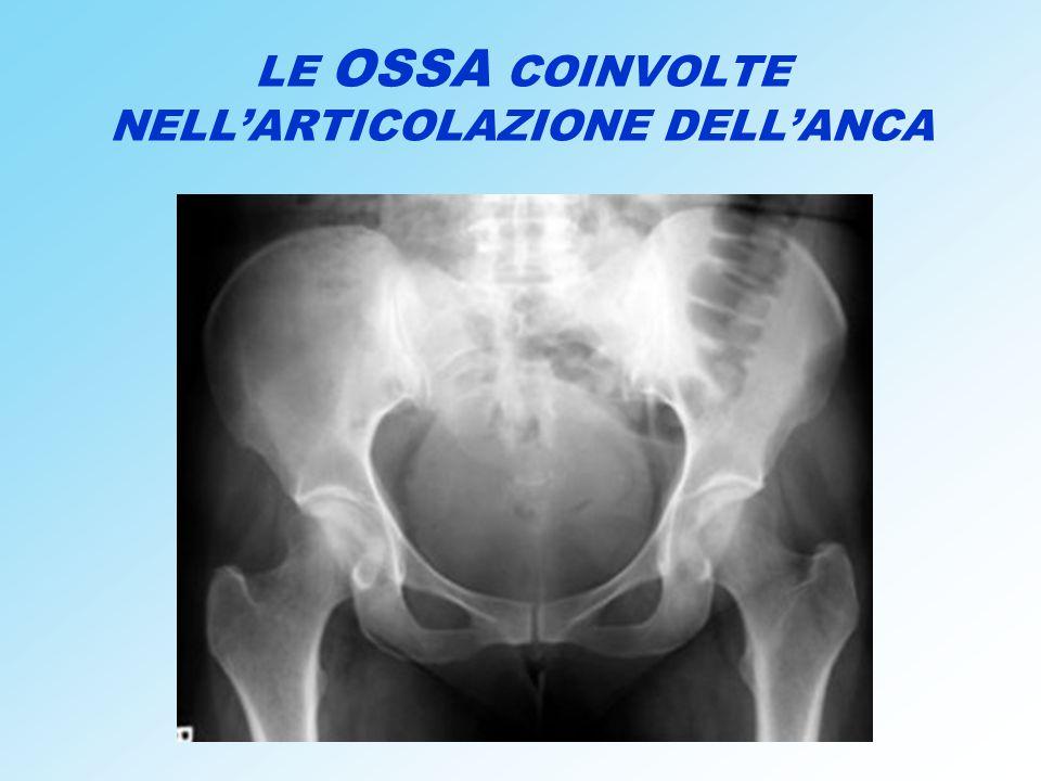 LE OSSA COINVOLTE NELL'ARTICOLAZIONE DELL'ANCA