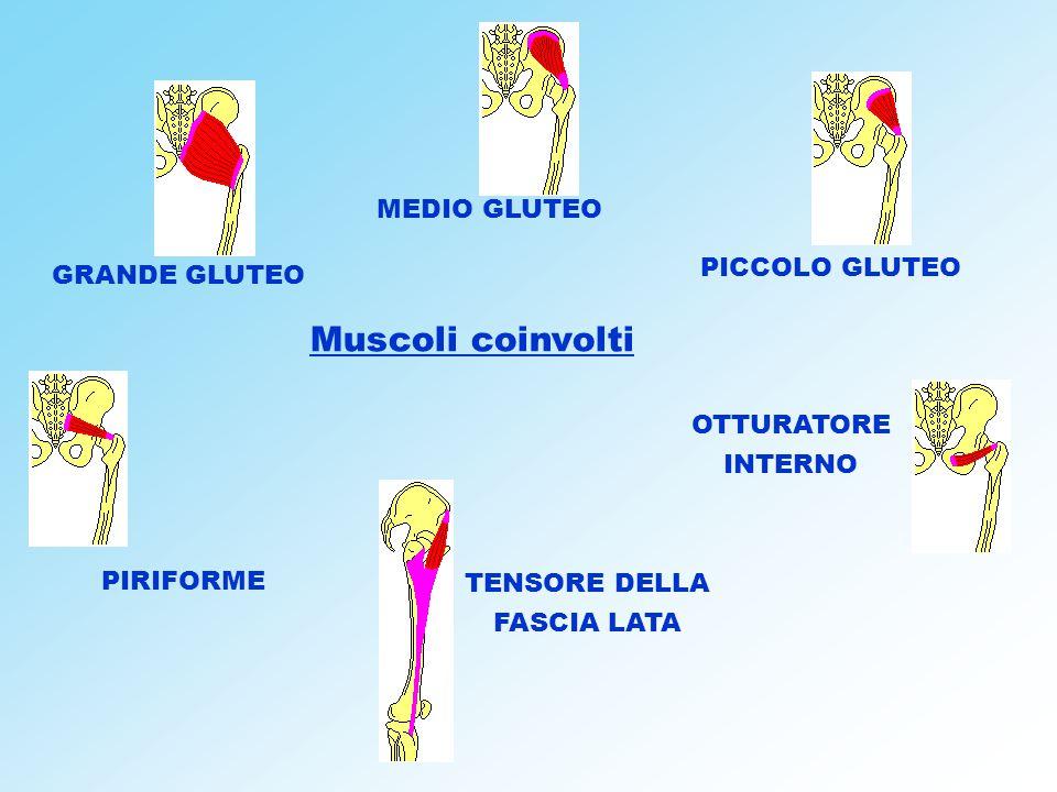 Muscoli coinvolti MEDIO GLUTEO PICCOLO GLUTEO GRANDE GLUTEO OTTURATORE