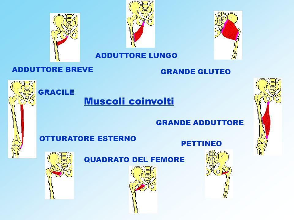 Muscoli coinvolti ADDUTTORE LUNGO ADDUTTORE BREVE GRANDE GLUTEO