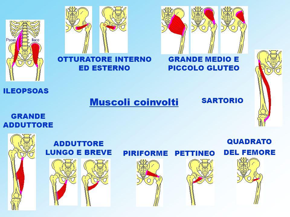Muscoli coinvolti OTTURATORE INTERNO ED ESTERNO GRANDE MEDIO E