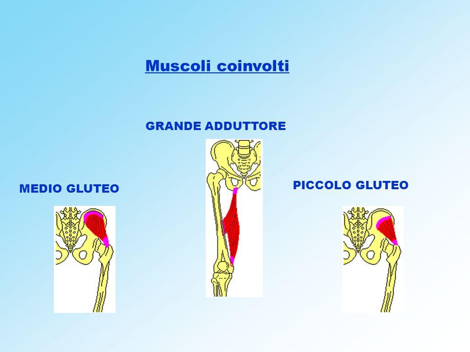 Muscoli coinvolti GRANDE ADDUTTORE PICCOLO GLUTEO MEDIO GLUTEO