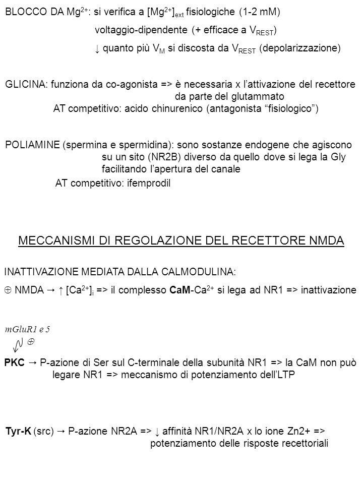 MECCANISMI DI REGOLAZIONE DEL RECETTORE NMDA