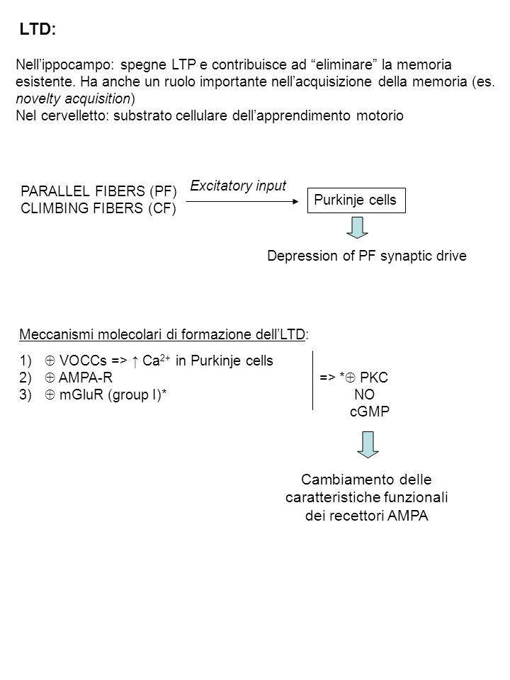 Cambiamento delle caratteristiche funzionali dei recettori AMPA