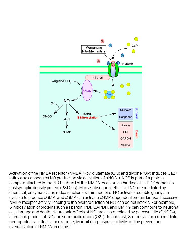 Activation of the NMDA receptor (NMDAR) by glutamate (Glu) and glycine (Gly) induces Ca2+ influx and consequent NO production via activation of nNOS.