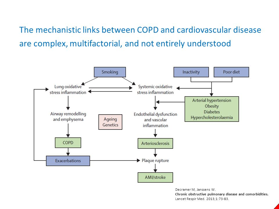 The mechanistic links between COPD and cardiovascular disease are complex, multifactorial, and not entirely understood