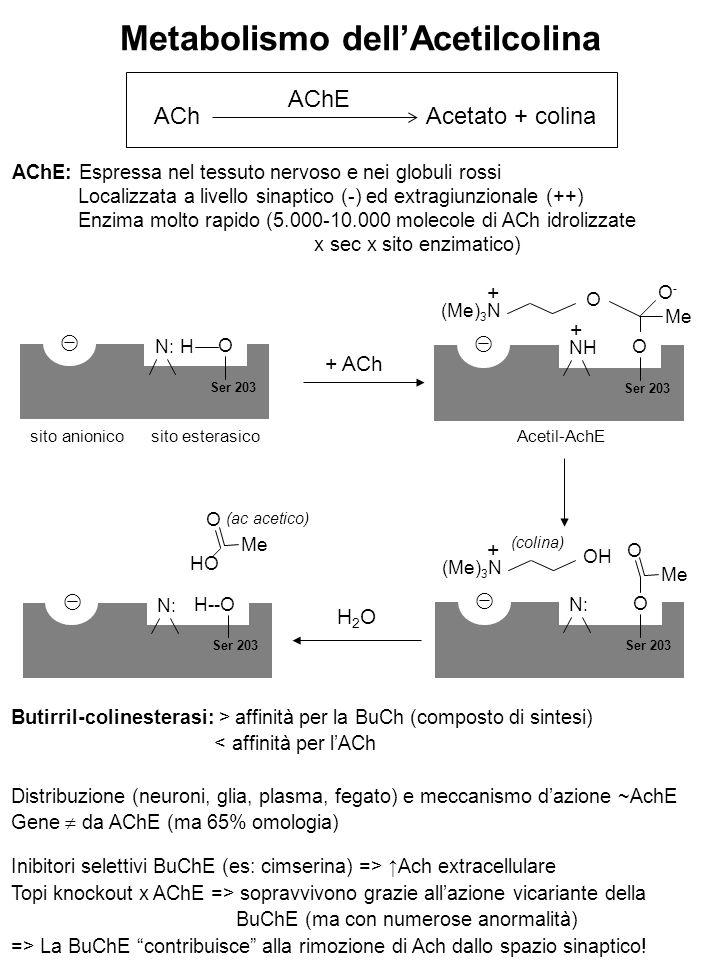 Metabolismo dell'Acetilcolina