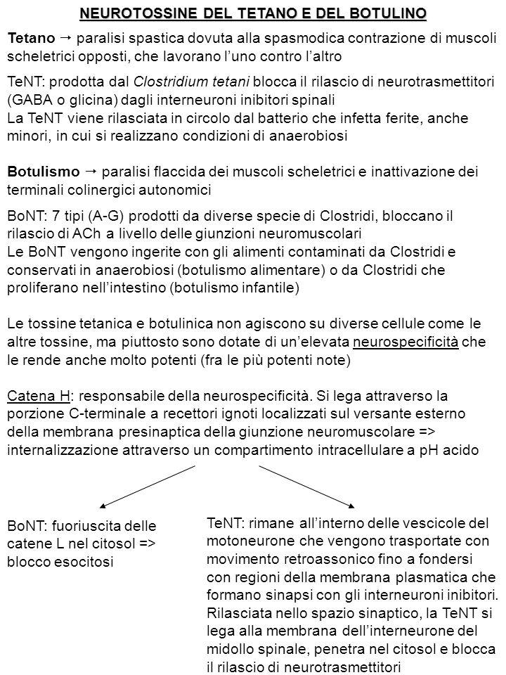 NEUROTOSSINE DEL TETANO E DEL BOTULINO