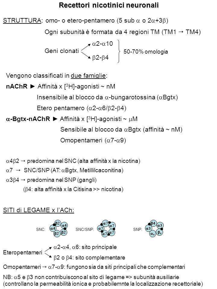 Recettori nicotinici neuronali