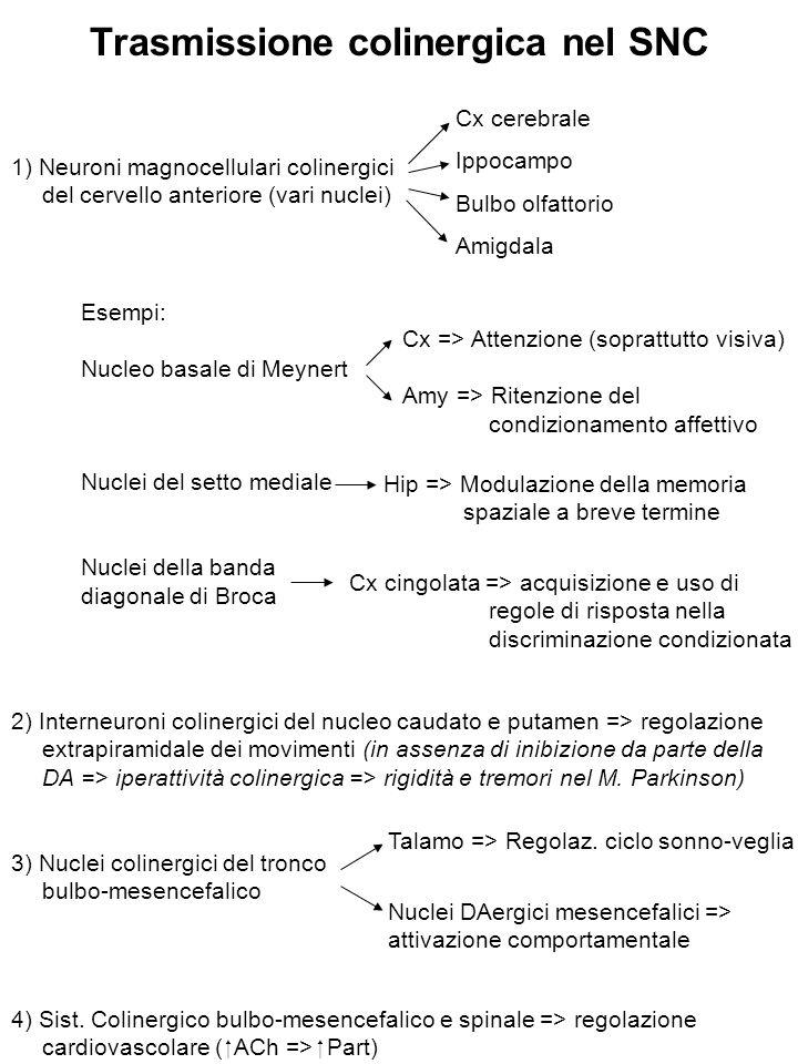 Trasmissione colinergica nel SNC