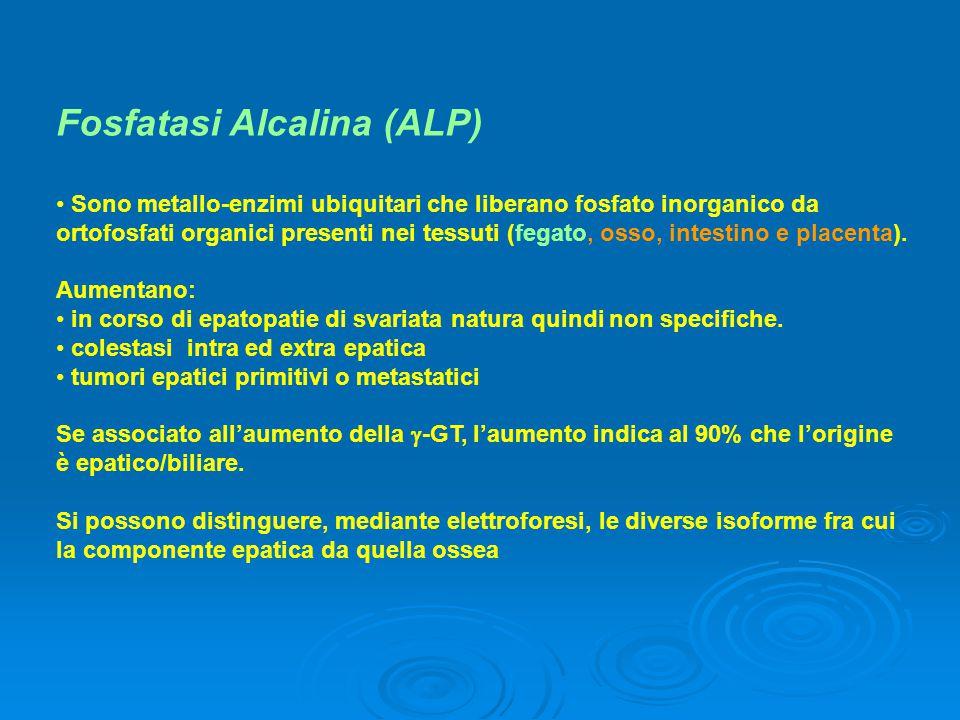 Fosfatasi Alcalina (ALP)