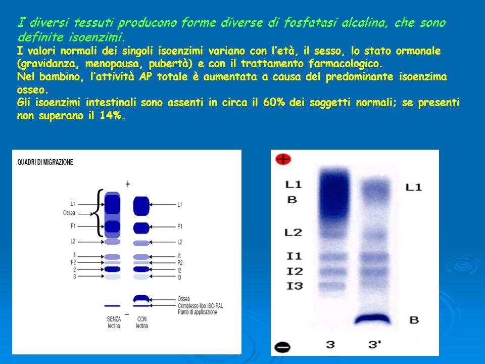 I diversi tessuti producono forme diverse di fosfatasi alcalina, che sono definite isoenzimi.