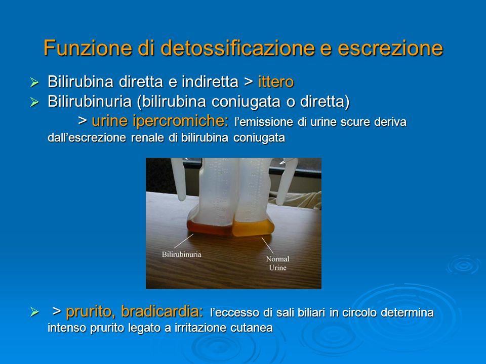 Funzione di detossificazione e escrezione