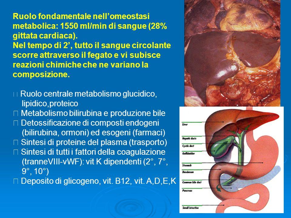  Metabolismo bilirubina e produzione bile