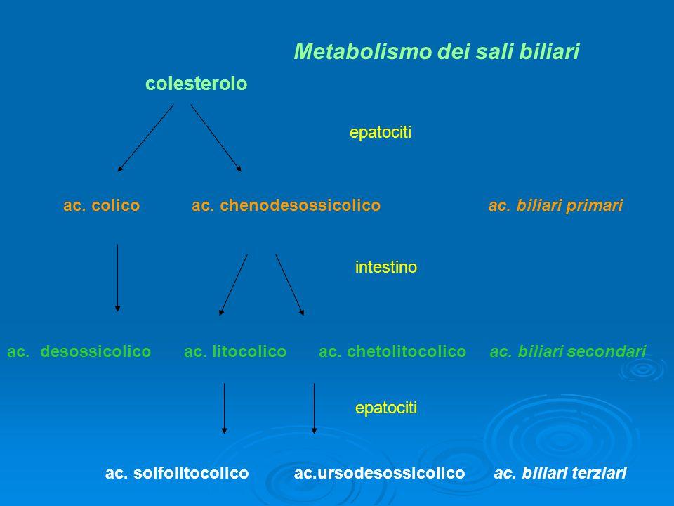 Metabolismo dei sali biliari
