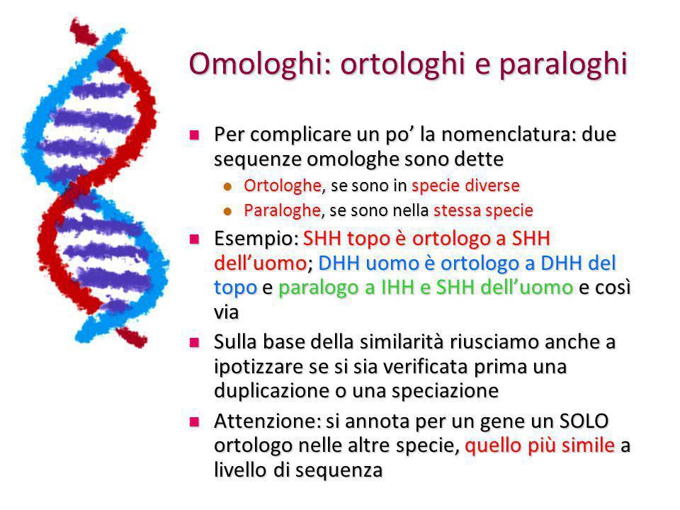 Omologhi: ortologhi e paraloghi
