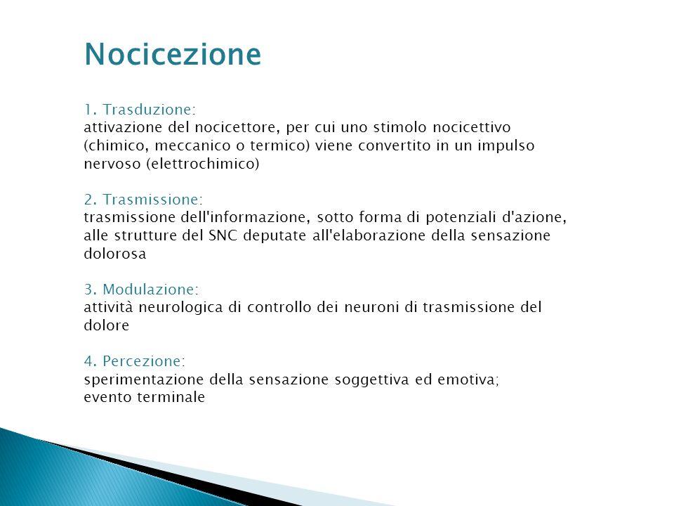 Nocicezione 1. Trasduzione: