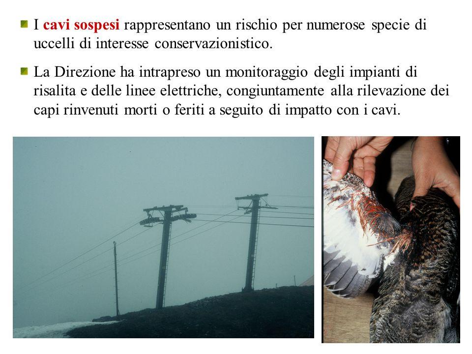 I cavi sospesi rappresentano un rischio per numerose specie di uccelli di interesse conservazionistico.
