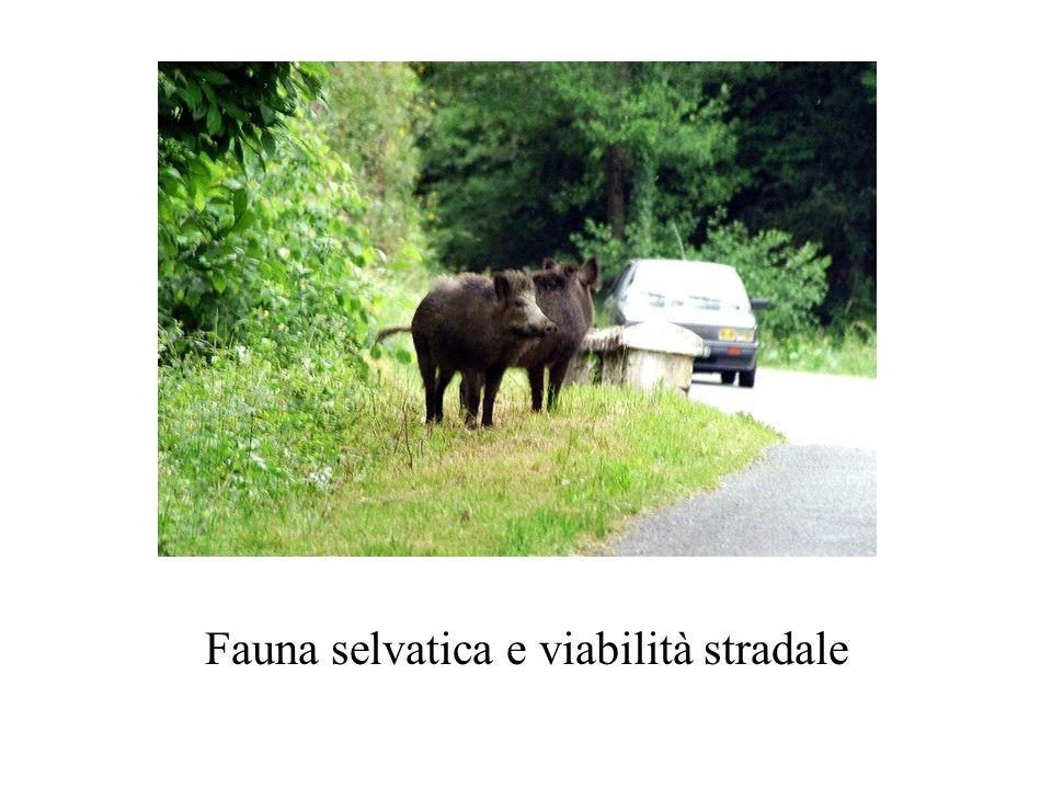 Fauna selvatica e viabilità stradale