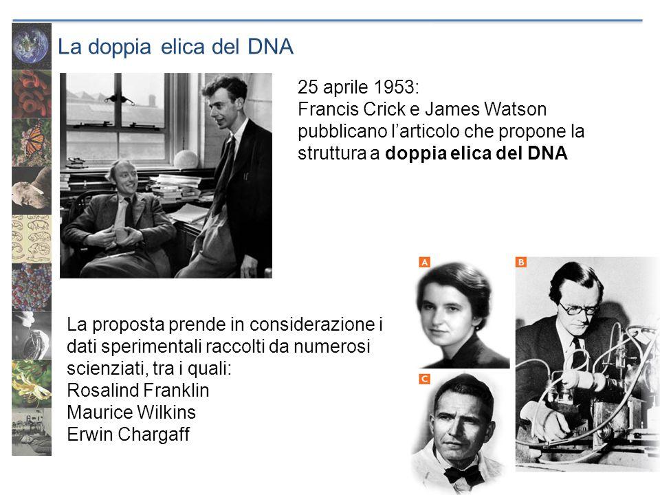 La doppia elica del DNA 25 aprile 1953: