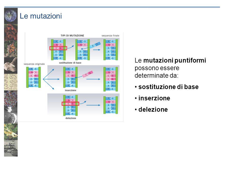 Le mutazioni Le mutazioni puntiformi possono essere determinate da: