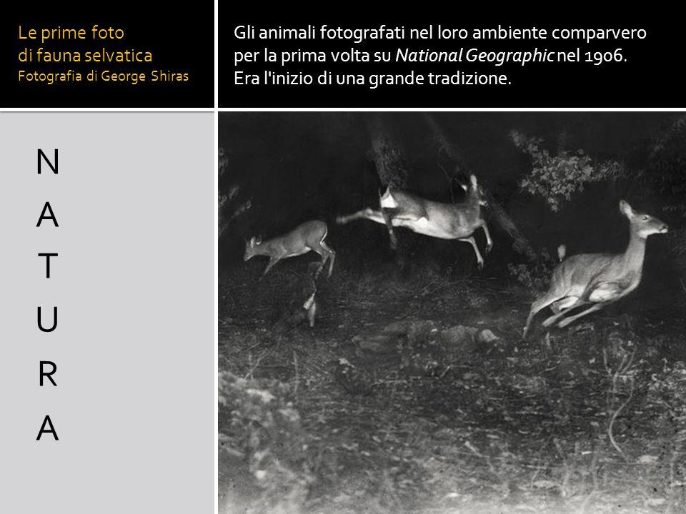 Le prime foto di fauna selvatica Fotografia di George Shiras