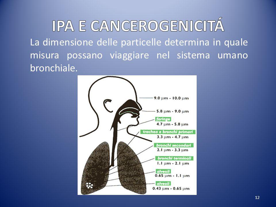 IPA E CANCEROGENICITÁ La dimensione delle particelle determina in quale misura possano viaggiare nel sistema umano bronchiale.